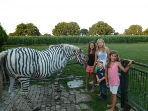 zebra, bastelideen, schulanfang conny, vechteerlebniss 003